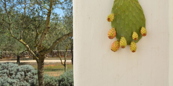 5 tips to use the prickly pear's leaves of Salento